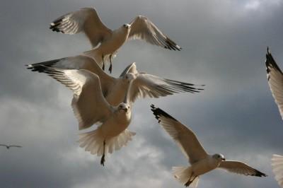 Holly Koffler - Seagulls In Brighton Beach