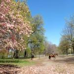 Matlack - Prospect Park